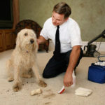 Most Effective Carpet Cleaning D.I.Y. Tips in Murrieta Carpet Cleaners