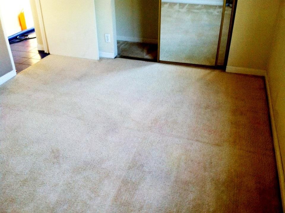 Best Tips on Cleaning Up After Pets in Murrieta Ca Carpet Cleaners