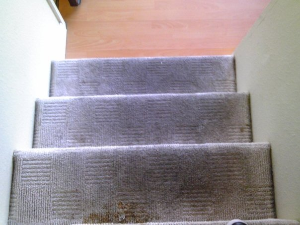 Methods and Benefits of Carpet Cleaning Murrieta Carpet Company