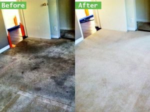 ▷🥇Professional Low Moisture Carpet Cleaning Service in Temecula Ca 92590